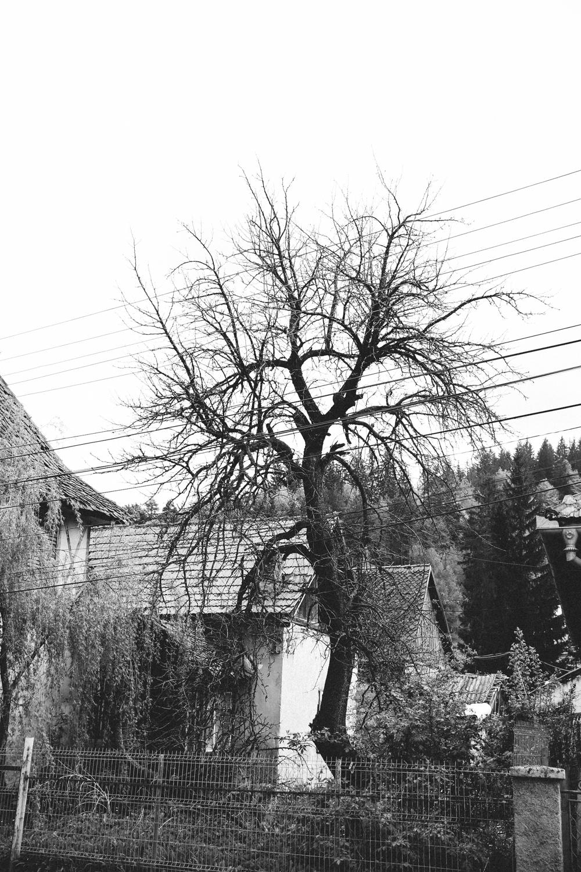 brasov-1340